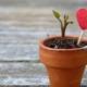 effect vertrouwen in de toekomst op geluk - Preventned